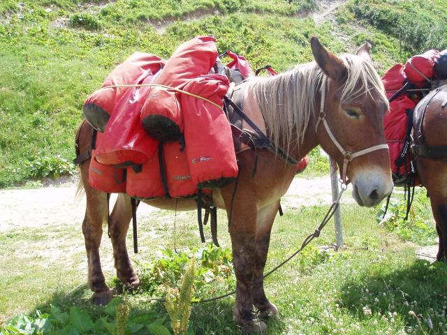 Notre mule, avec nos sacs (pas plus de 7 kgs chacun!)