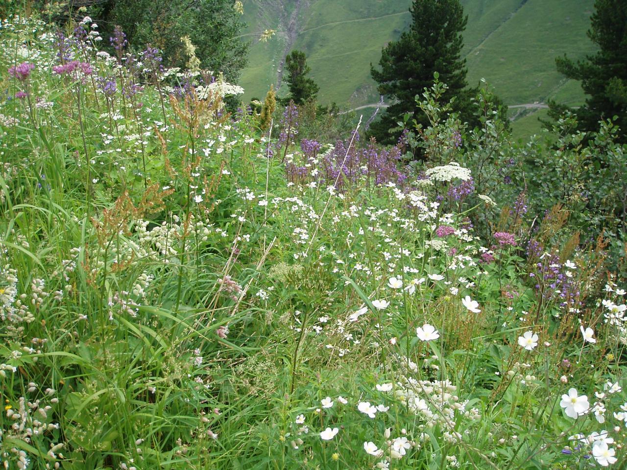 Beaucoup de fleurs sur notre parcours