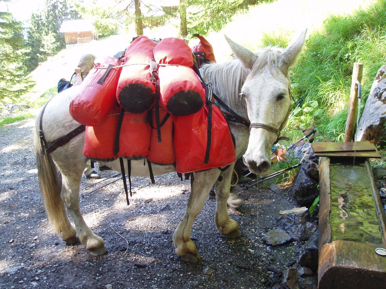 notre mule sur le chemin du refuge de GRENAIRON
