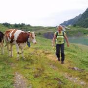 Départ avec les vaches